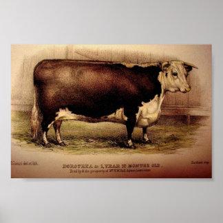 1874 DOROTHEA de grabado Leominster del ganado de  Poster