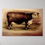1874 Engraving Hereford Cattle DOROTHEA Leominster Poster