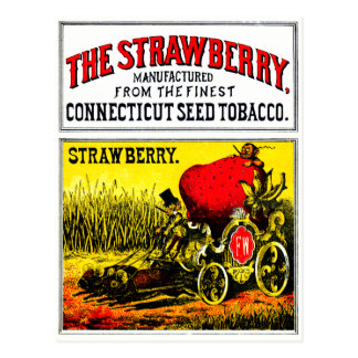 1874 The Strawberry Cigar Post Card