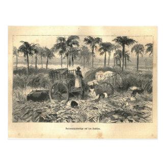 1877 impresión Cuba Antillas, tierra y su gente Tarjeta Postal