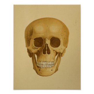 1879 Vintage Anatomy Print Human Skull