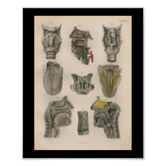 1879 Vintage Bock Anatomy Print Nose Throat