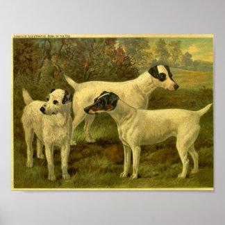 1881 Vintage Fox Terriers Print