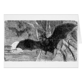 1885 Vampire Bat Illustration Card