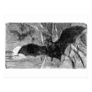 1885 Vampire Bat Illustration Postcard
