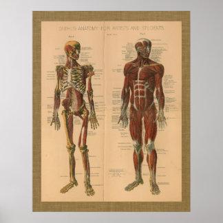 1888 Skeleton Muscle Anatomy Vintage Poster