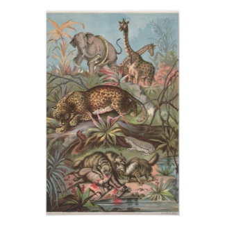 1889 Wild Animals in the African Forest Poster