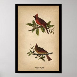 1890 Bird Print Cardinal Grosbeak