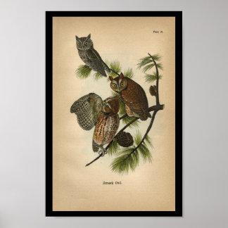 1890 Bird Print Screech Owls
