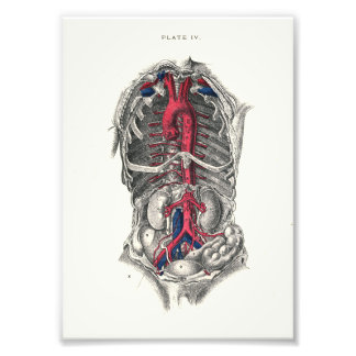 1895 Human Anatomy Print Arteries