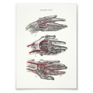 1895 Human Anatomy Print Hands Photographic Print