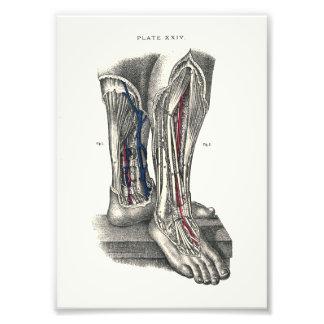 1895 Human Anatomy Print Leg Art Photo