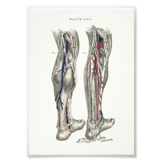 1895 Human Anatomy Print Leg Photo Art