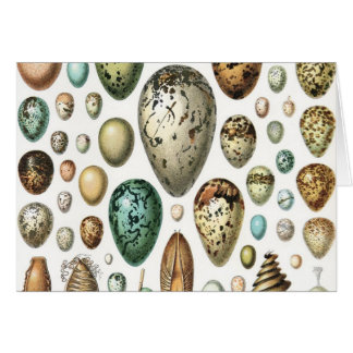 1897 ANIMAL EGGS from Meyers Konversations-Lexikon Card