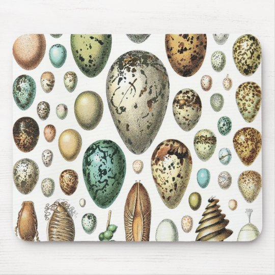 1897 ANIMAL EGGS from Meyers Konversations-Lexikon Mouse Pad