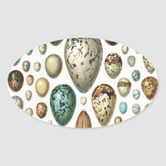 1897 ANIMAL EGGS from Meyers Konversations-Lexikon Oval Sticker