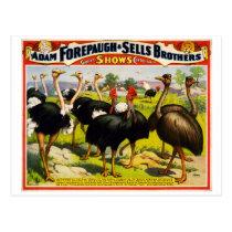 1898 ostrich circus vintage poster postcard
