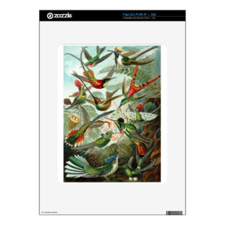 1899 Hummingbird Species Art Forms of Nature Print Decals For The iPad
