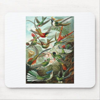 1899 Hummingbird Species Art Forms of Nature Print Mouse Pad