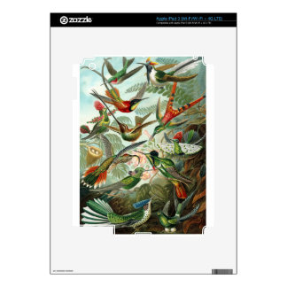 1899 Hummingbird Species Art Forms of Nature Print Skin For iPad 3