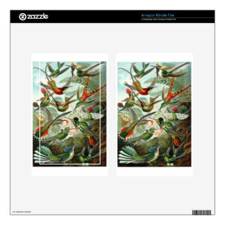 1899 Hummingbird Species Art Forms of Nature Print Skin For Kindle Fire
