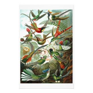 1899 Hummingbird Species Art Forms of Nature Print Stationery