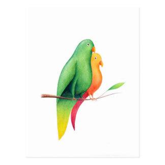 18 – Pappagalli Postcard