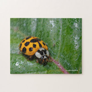 18-Spotted Yellow-and-Black Ladybug Puzzle
