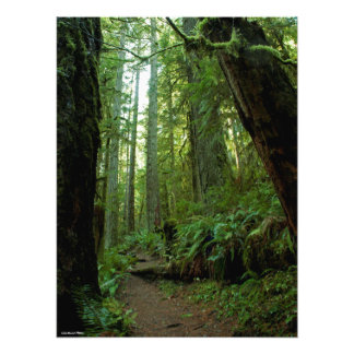 18X24 Old Growth Forest at Twanoh State Park, WA Photo Print