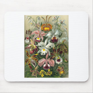 1904 Orchids Art Forms of Nature Print Mouse Pad