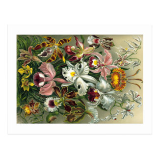 1904 Orchids Art Forms of Nature Print Postcard