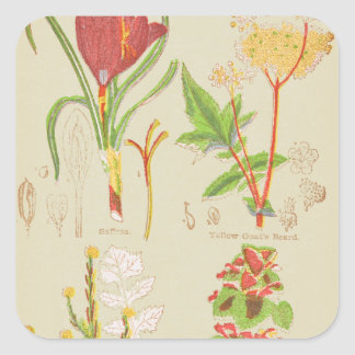 1904 Plant Drawing Square Sticker