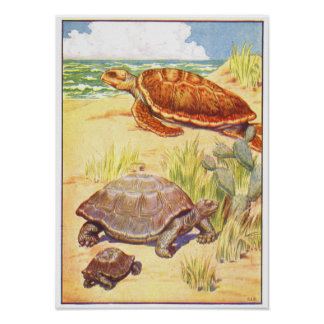 1906 Book Illustration of Turtles Poster