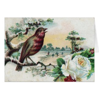 1908 Bird Postcard card