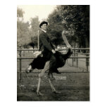 1910 Ostrich Riding Post Cards