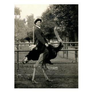 1910 Ostrich Riding Postcard