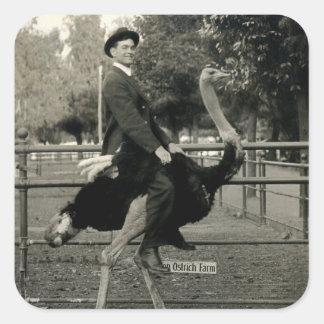 1910 Ostrich Riding Square Sticker