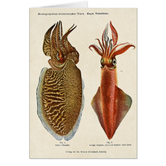 1913 Sepia und Octopus Card
