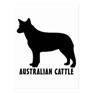 1915042007 Australian Cattle (Animales) Postcard