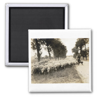 1921 French Shepherd 2 Inch Square Magnet