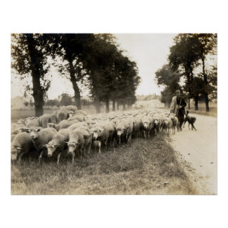 1921 French Shepherd Poster