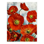 1922 Iceland Poppy Illustration Postcard