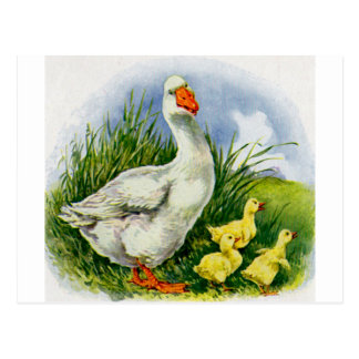1930s mama duck and ducklings postcard