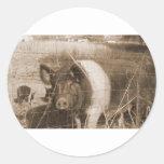 1960s Pig Round Stickers