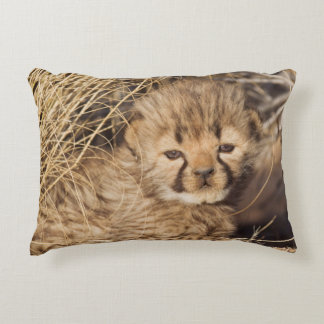 19 days old male cub. Namibia Decorative Pillow