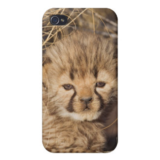 19 days old male cub. Namibia iPhone 4 Case
