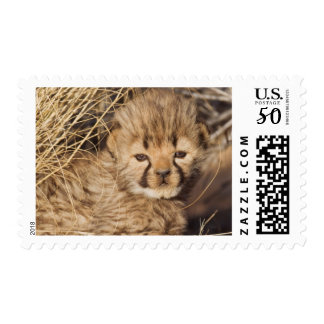 19 days old male cub. Namibia Postage