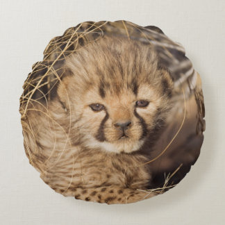 19 days old male cub. Namibia Round Pillow