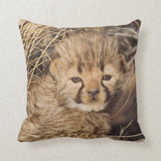19 days old male cub. Namibia Throw Pillow
