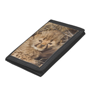 19 days old male cub. Namibia Trifold Wallet